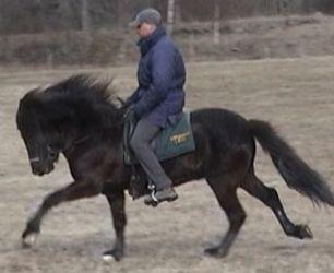 knäpper i lederna häst
